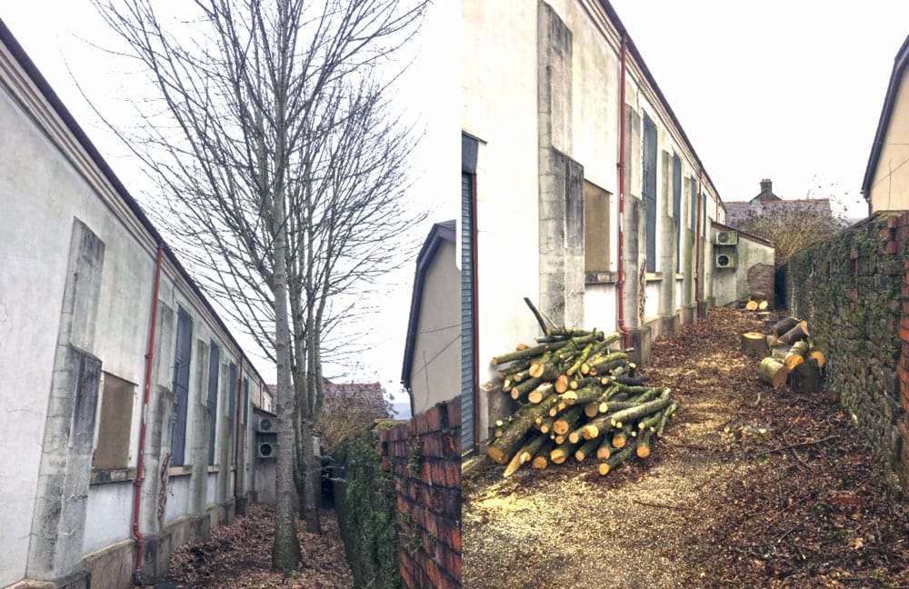 Tree Removal and Cutting South Wales