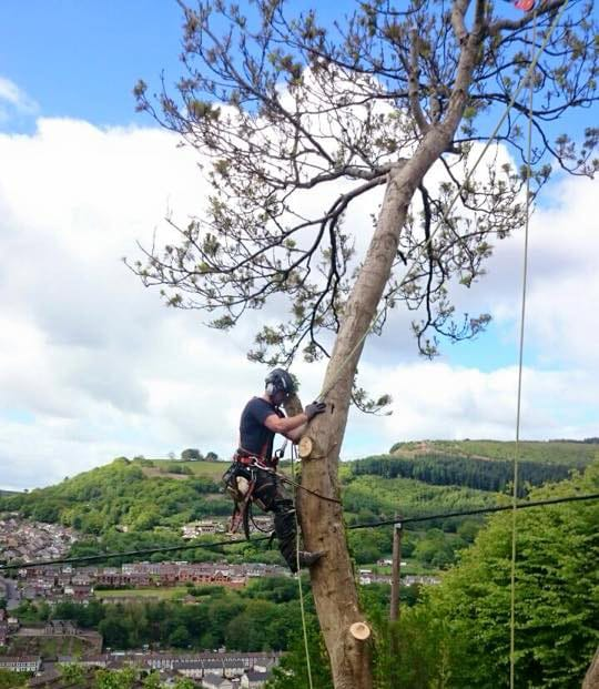 Tree-Pruning-and-Maintenance-South-Wales