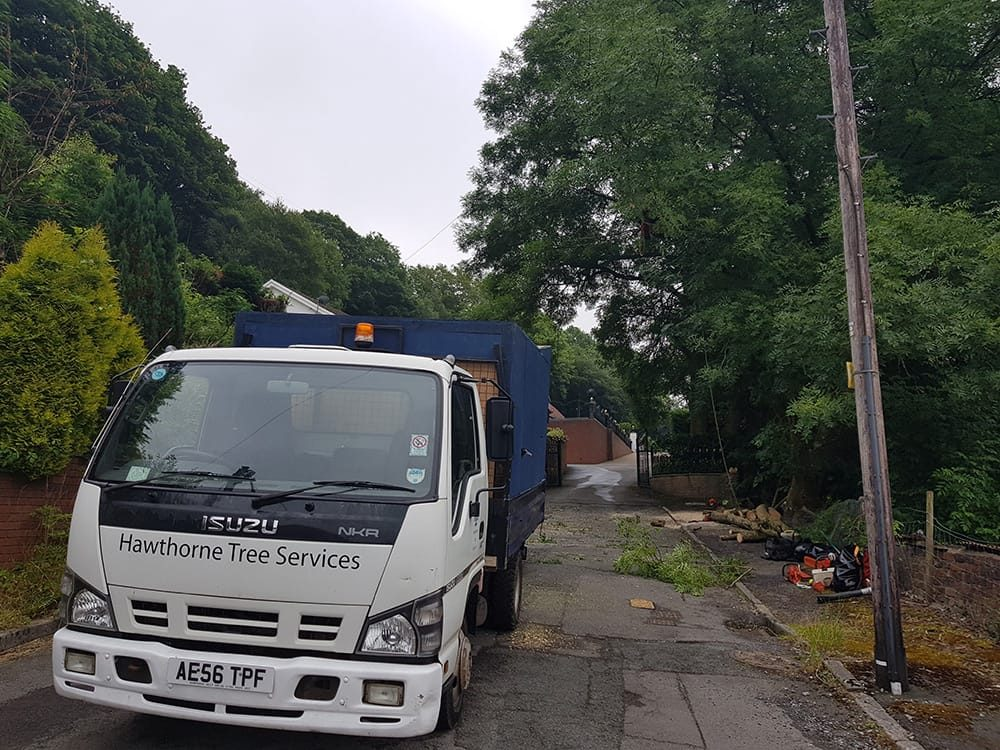Professional Tree Service and Grounds Maintenance South Wales Cardiff Swansea Bristol