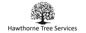 Hawthorne Tree Services